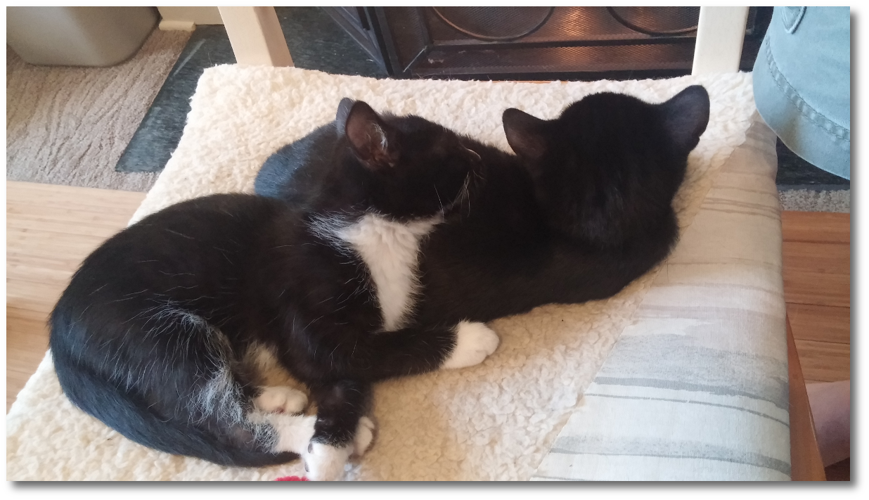 Lucy and Linus, sleeping at last!